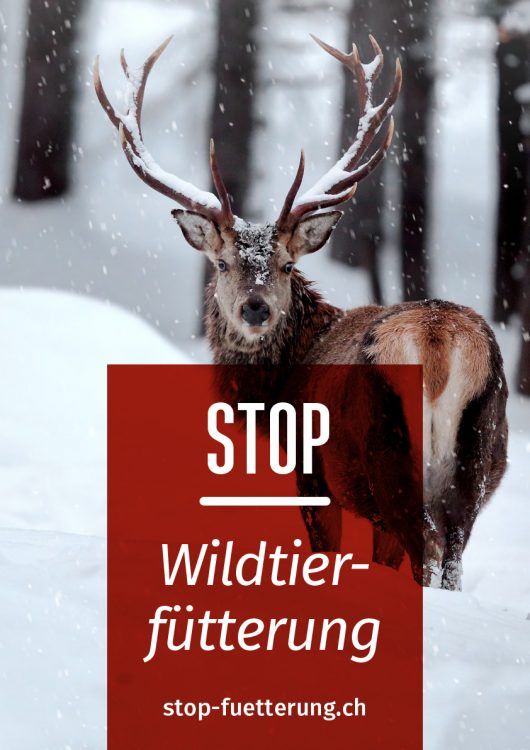 flyer_stop_fuetterung